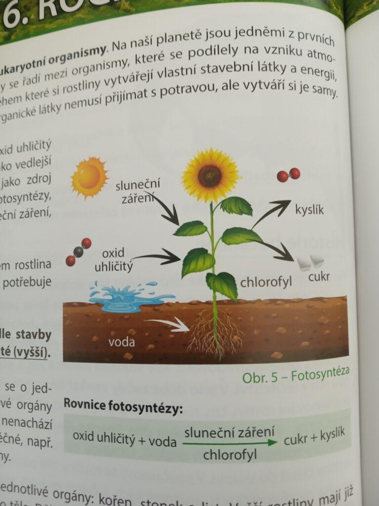 Fotosyntéza - obrázek